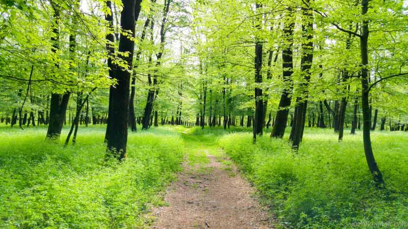 Nadherny les na Ceste SNP