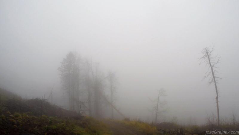 CestaSNP_2016_jozefkrajnak.com Hmla v lese